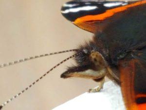 Freundlich lächelnder Schmetterling